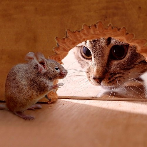 Кошка смотрит на мышку, которая сидит в норке