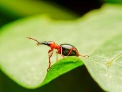 Долгоносик на листе растения