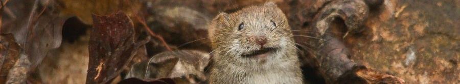 Удивлённая мышь выглядывает из листвы