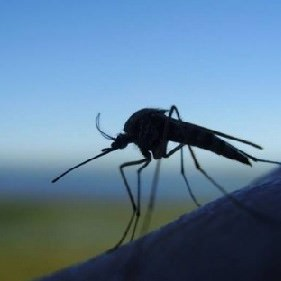 Комар в природе